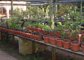 Kranspoort Nursery